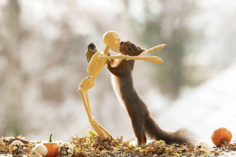A Bispgarden, en Suède, le photographe animalier Geert Weggen, a offert une jolie fête de Halloween aux écureuils de son jardin.