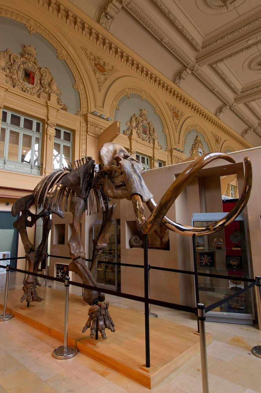 Le mammouth fait 3,40 mètres de haut sur 5,30 m d'envergure.