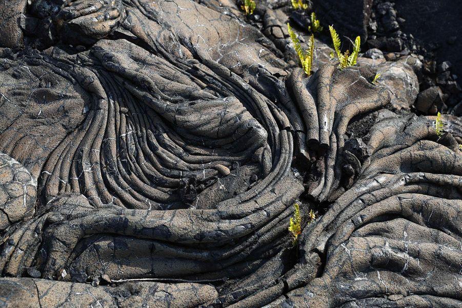 De la lave solide, reste de l'éruption de 1990 du volcan Kilauea.