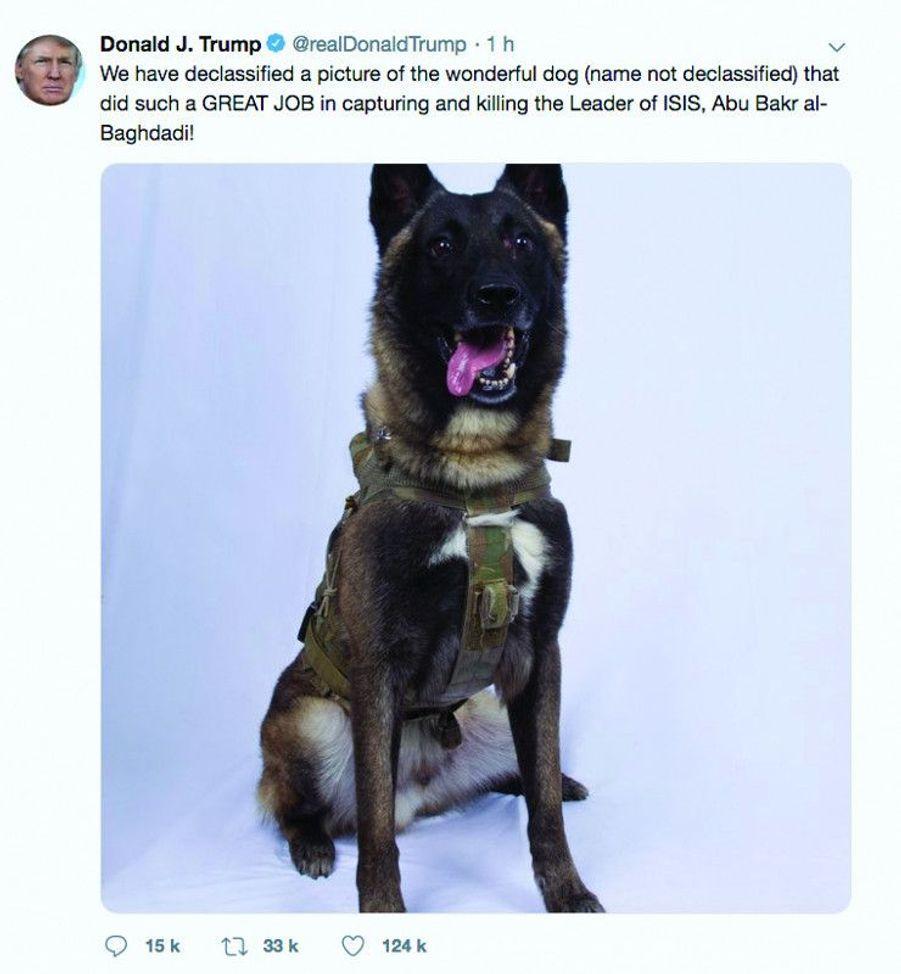 « Super travail », twitte Donald Trump avec la photo déclassifiée du chien qui a participé à la chasse d'Al-Baghdadi.