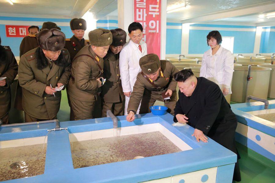 Kim Jong-un dans une ferme piscicole de Pyongyang, sur des photos publiées le 21 février 2017.
