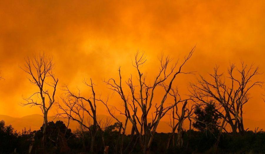 157 000 hectares de végétation sont partis en fumée.