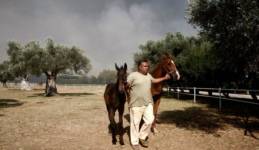 Un habitant de Dioni tente de protéger ses chevaux des flammes.