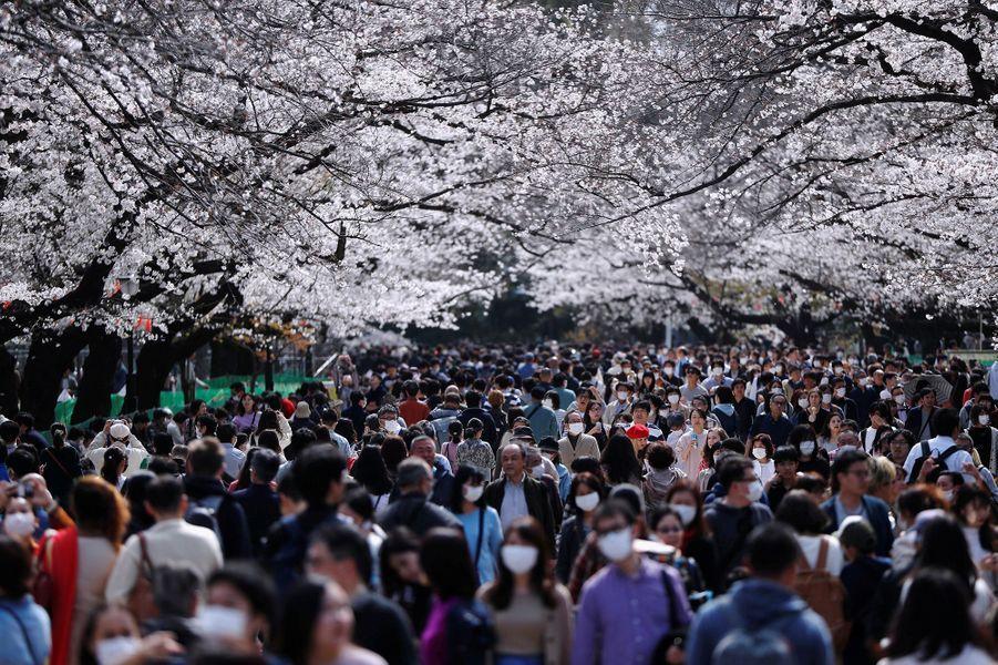 LeParc d'Ueno, à Tokyo (Japon), le 22 mars.