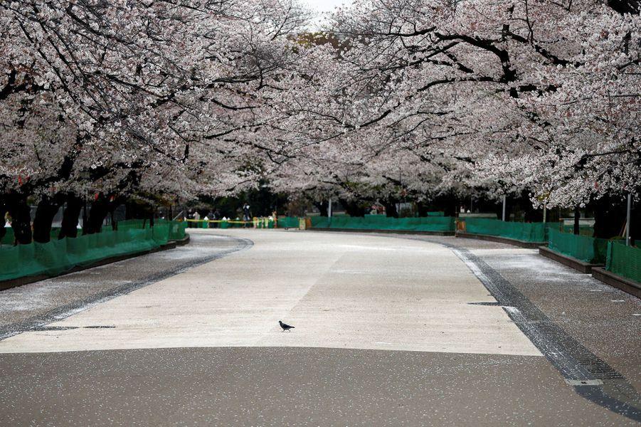 LeParc d'Ueno, à Tokyo (Japon), le 28 mars.