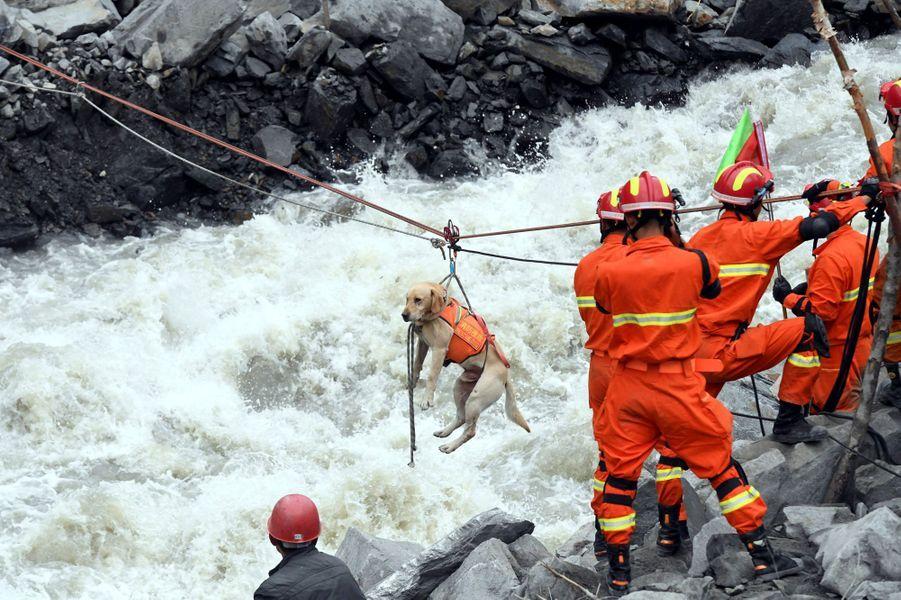Un chien sauvé à Xinmo, en Chine.