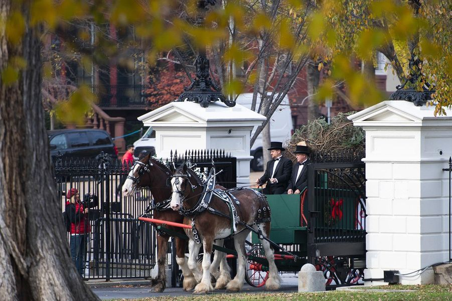Le sapin de Noël est arrivé à la Maison-Blanche, le 19 novembre 2018.