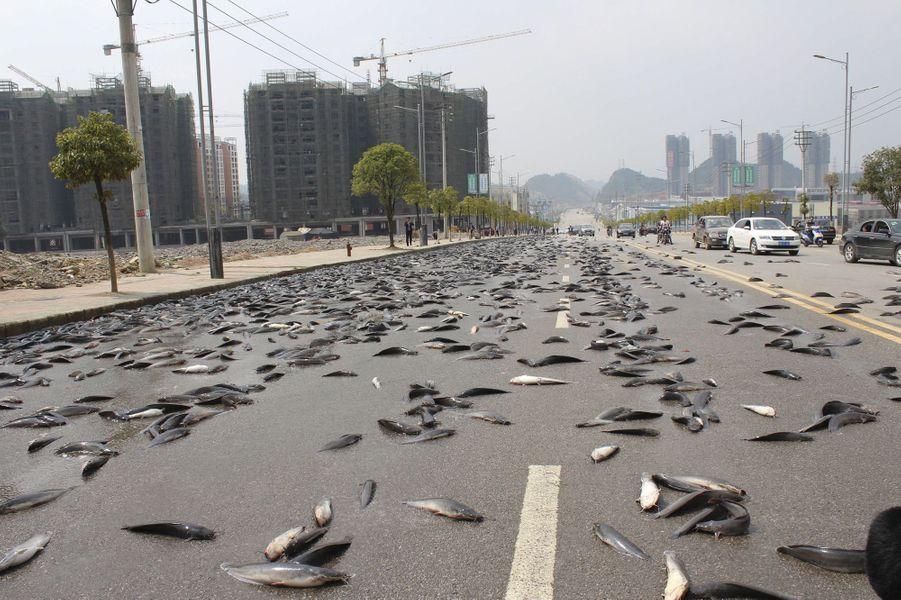 Il pleut (presque) des poissons en Chine