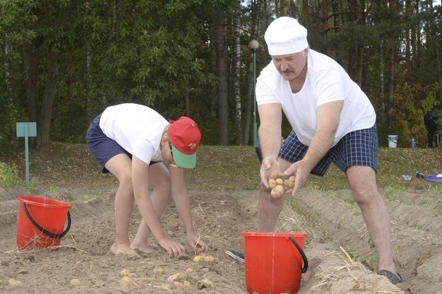 En vacances avec son fils Nikolaï, Alexandre Loukachenko ramasse des pommes de terre, le 17 août 2015