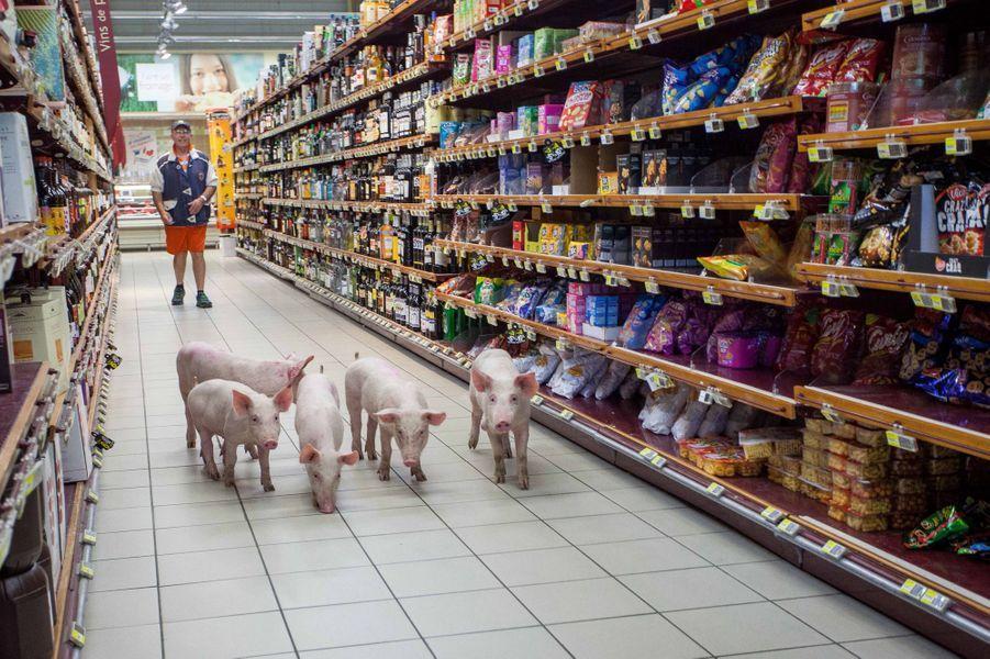 20 août. La colère des agriculteurs français. Photo prise à Sarlat-la-Canéda