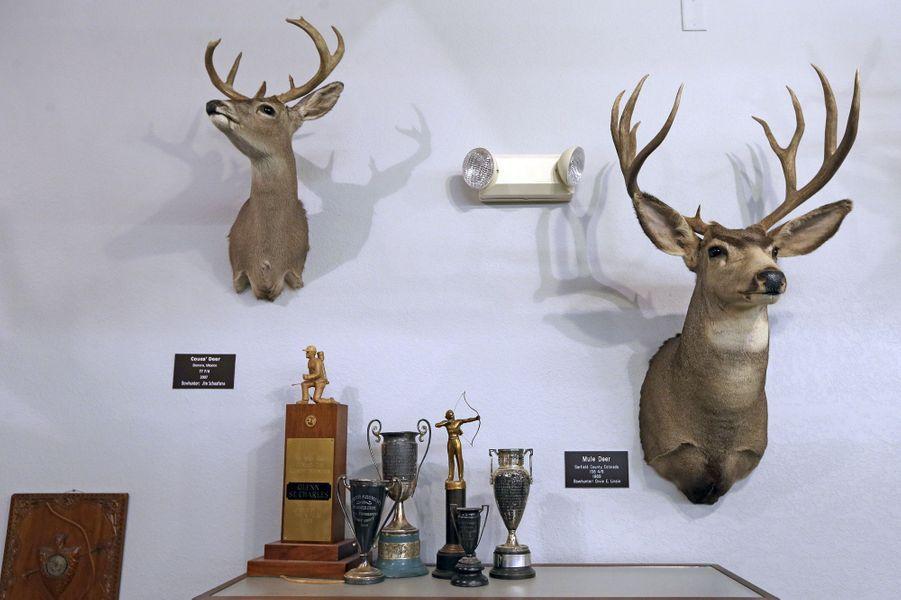Trophées de cerf