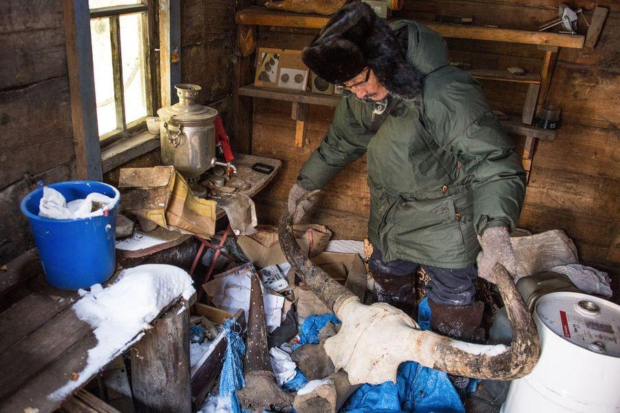 """500.000 tonnes de défenses de mammouths, surnommées """"l'ivoire des glaces"""", reposent en Iakoutie."""
