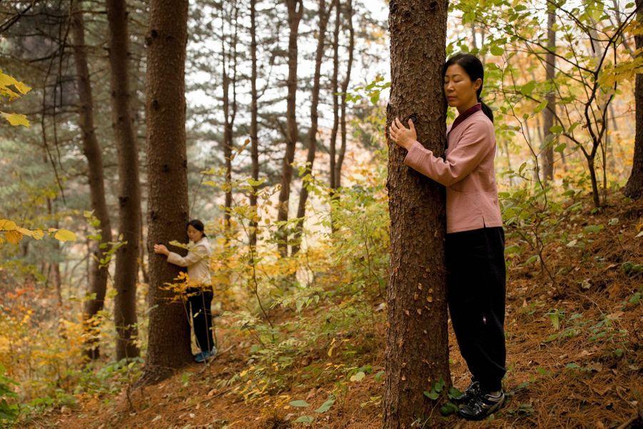 Les « bains » de forêt, une thérapie antistress proposée à l'Healience Zen Village, un centre de remise en forme situé à deux heures de Séoul.