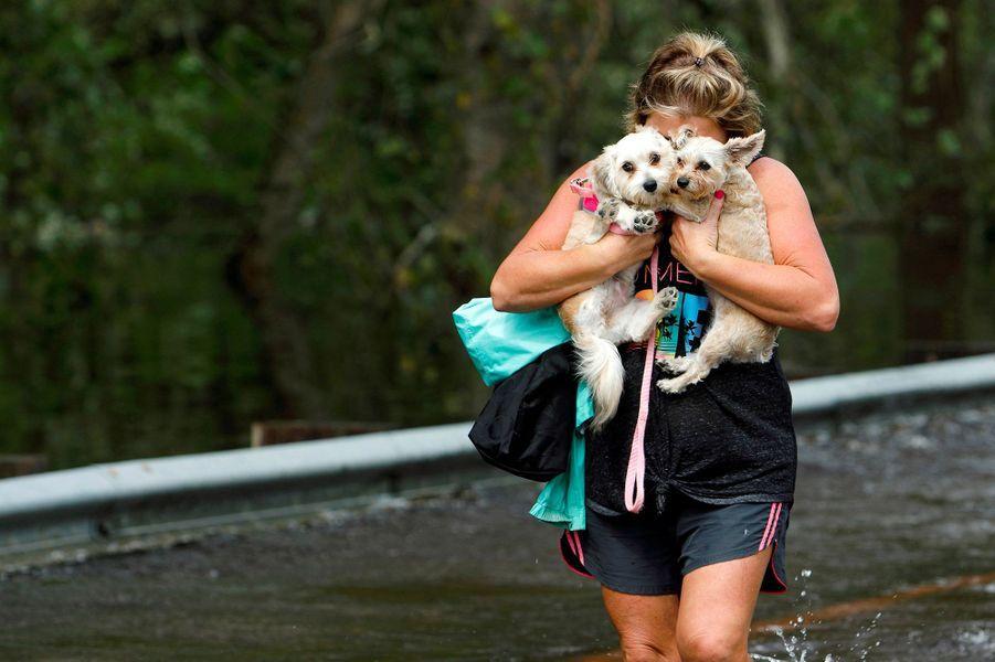 Les pieds dans l'eau, une femme transporte ses chiens àBurgaw.