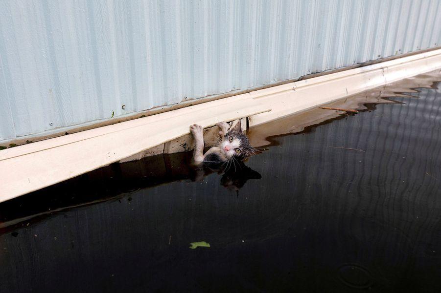 Ce chat serait probablement mort noyé s'il n'avait pas été sauvé par les secours àBurgaw.