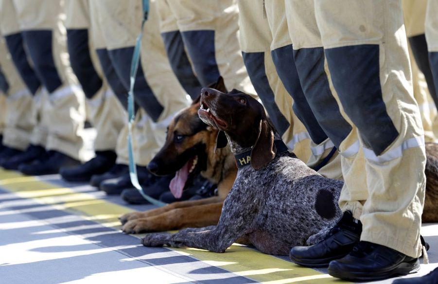 Un chien des USAR (Urban Search and Rescue) tchèques part pour Beyrouth.