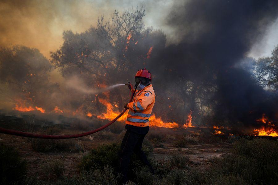 L'incendie se propage dans une forêt de pins.