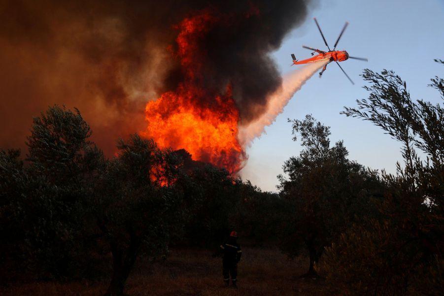 Les flammes et les oliviers.