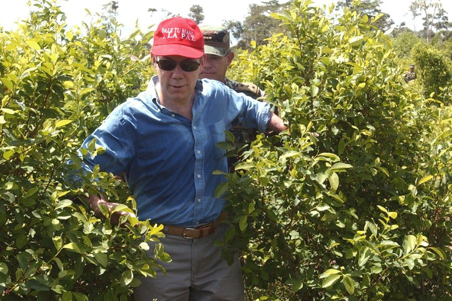 Juan Manuel Santos, alors ministre de la Défense, lors d'une visite dans une plantation de coca à La Hormiga, en octobre 2006.