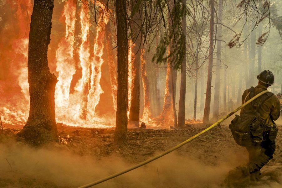 Près du parc national de Yosemite, l'incendie Ferguson ne fait qu'une bouchée de millions de conifères tués par cinq ans de sécheresse. Ici, le débroussaillage préventif n'est pas obligatoire.