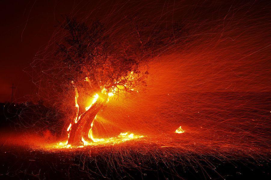 Un arbre en flammes dans lecomté deSonoma
