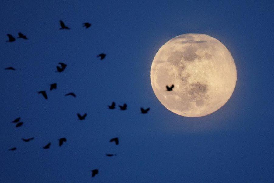 Photo de la super lune