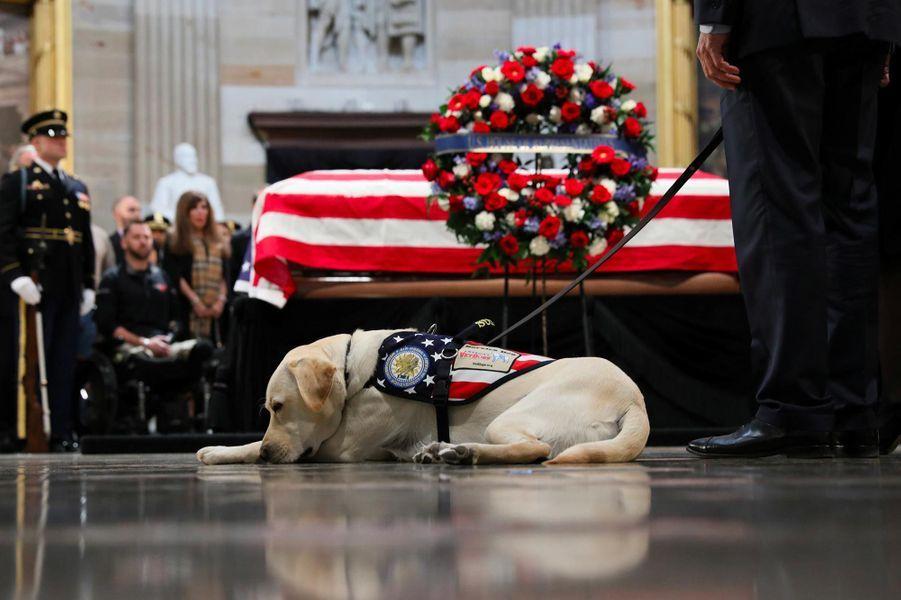 Sully, le chien d'assistance de George H. W. Bush.