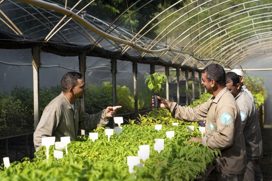 Un million de plants par an grandissent dans la pépinière.