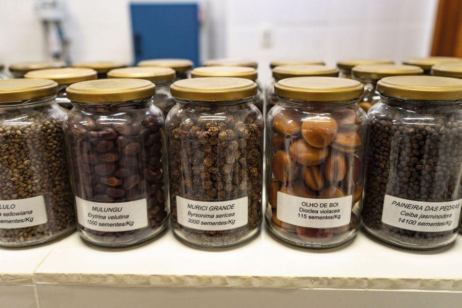 Dans le laboratoire de semences, une centaine de variétés de graines sont conservées.