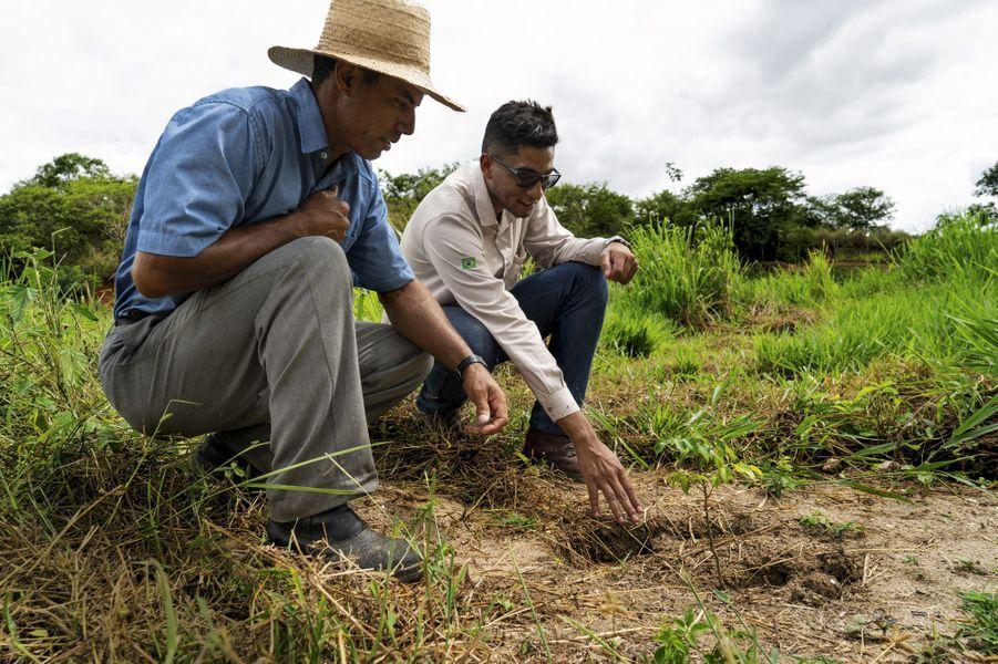 Dans son champ, Roberto le paysan replante aussi avec l'aide de Tiago, un technicien de l'Instituto Terra.