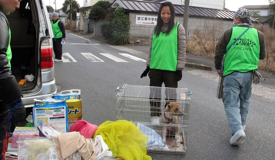 Malgré le manque de nourriture, les rayons ionisants et le froid, de nombreux chats, chiens et bêtes sauvages ont survécu à l'intérieur et près de la zone contaminée. Aujourd'hui, l'organisation des «Secours des Animaux de Fukushima» (UKC Japan) les recherche afin de les mettre à l'abri et de les soigner.