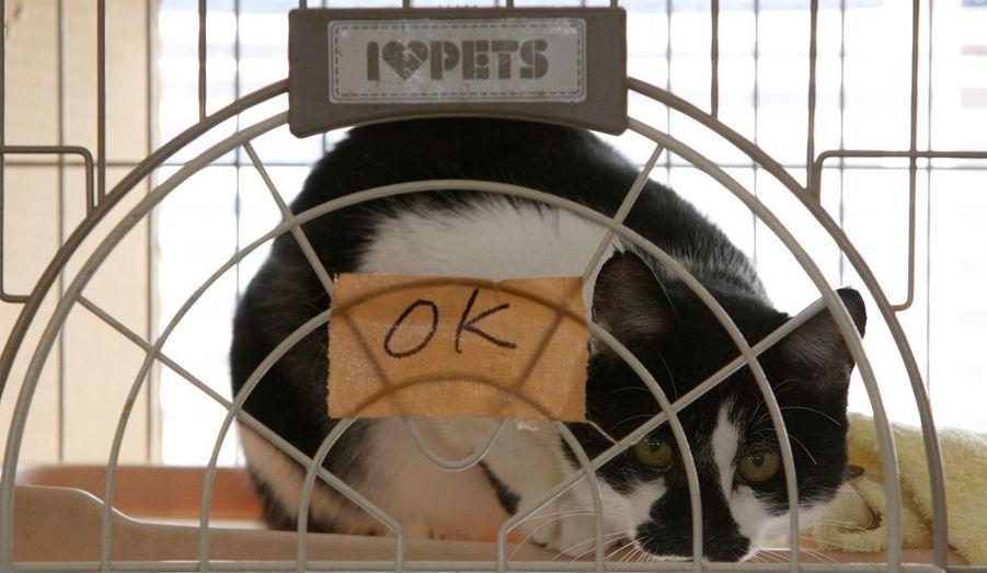 Un chat trouvé par l'organisation UKC Japan et directement placé dans une cage pour être soigné et nourri.
