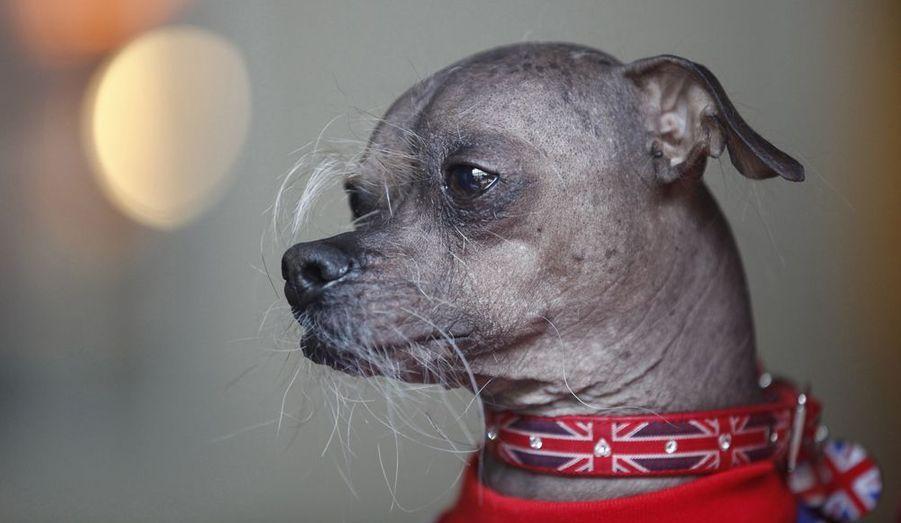 La 24ème édition du concours du chien le plus laid au monde a eu lieu le 22 juin, dans la ville californienne de Petaluma, au sud de San Francisco. Le grand gagnant est Mugly, chien chinois à crête de huit ans qui nous vient d'Angleterre. Voici un florilège de ces participants à quatre pattes.