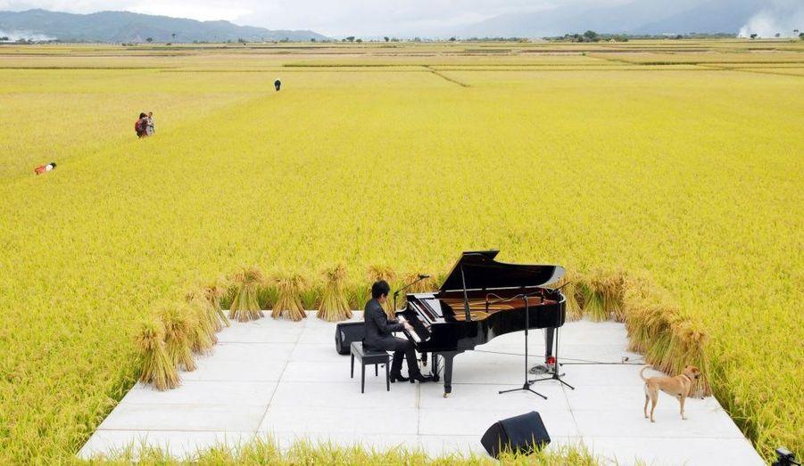 Le pianiste taïwanais Chen Kuan-yu joue un concert classique au milieu d'un champ dans la commune de Shishang en Chine.