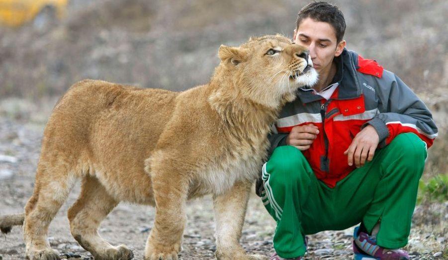 Richie, un jeune lion, et trois autres de ses congénères, vont être expédiés de Roumanie en Afrique du Sud. Lucian Craita, un jeune Roumain, qui les a élevé, s'amuse une dernière fois avec lui.