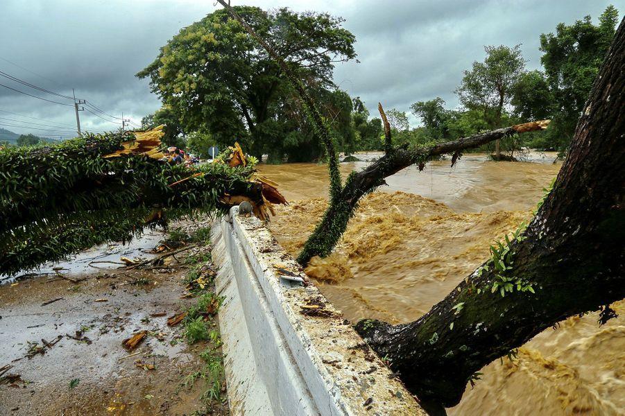 Un arbre remonte en-dessous d'un pont pendant de fortes inondations dans la province de Loei en Thaïlande le 2 août 2020