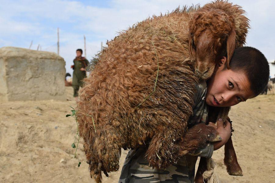 22 septembre 2015, un petit garçon afghan transporte un mouton sur ses épaules.