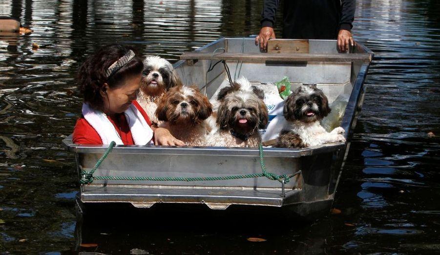 Une femme et ses chiens sont évacuées d'urgence d'une zone déjà inondée de Bangkok, le 26 octobre.