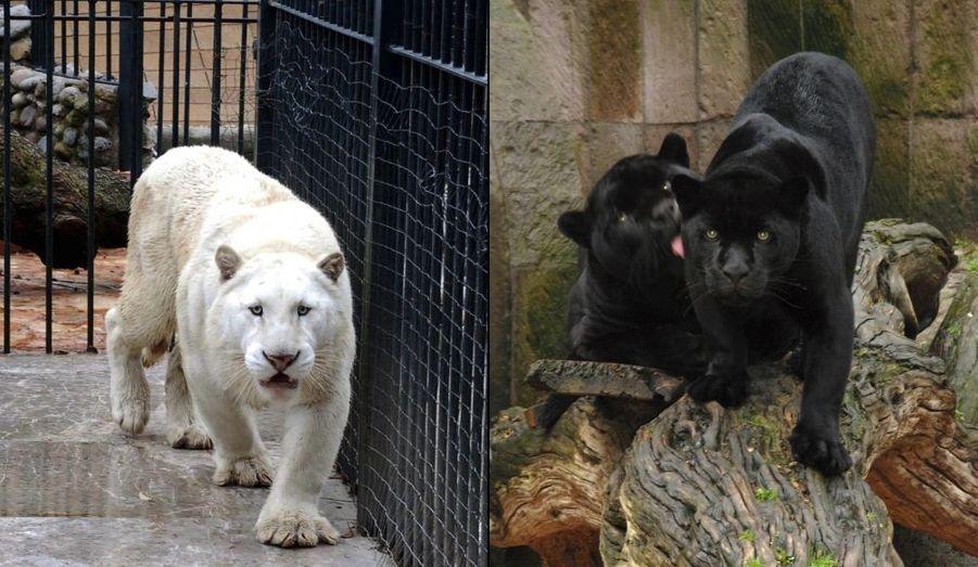 Des bêtes saisies dans la villa d'un narcotrafiquant arrêté.