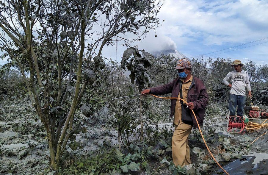 Un fermier nettoie ses légumes.