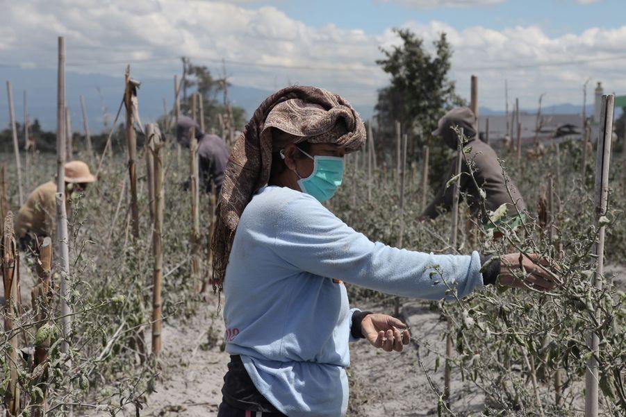 Une femme nettoie ses cultures à Karo.