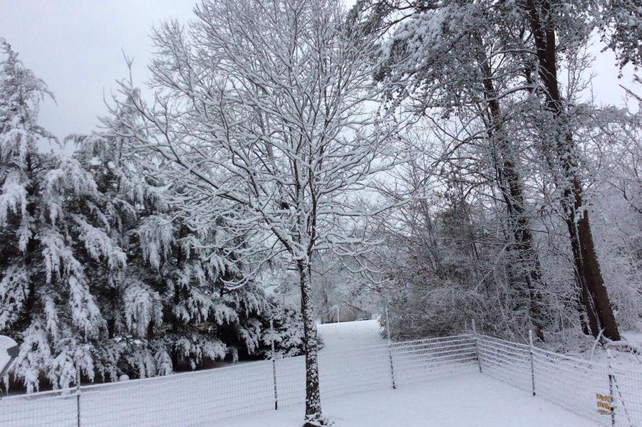 Des arbres enneigés àMaryville, dans le Tennessee, le 29 janvier 2019.