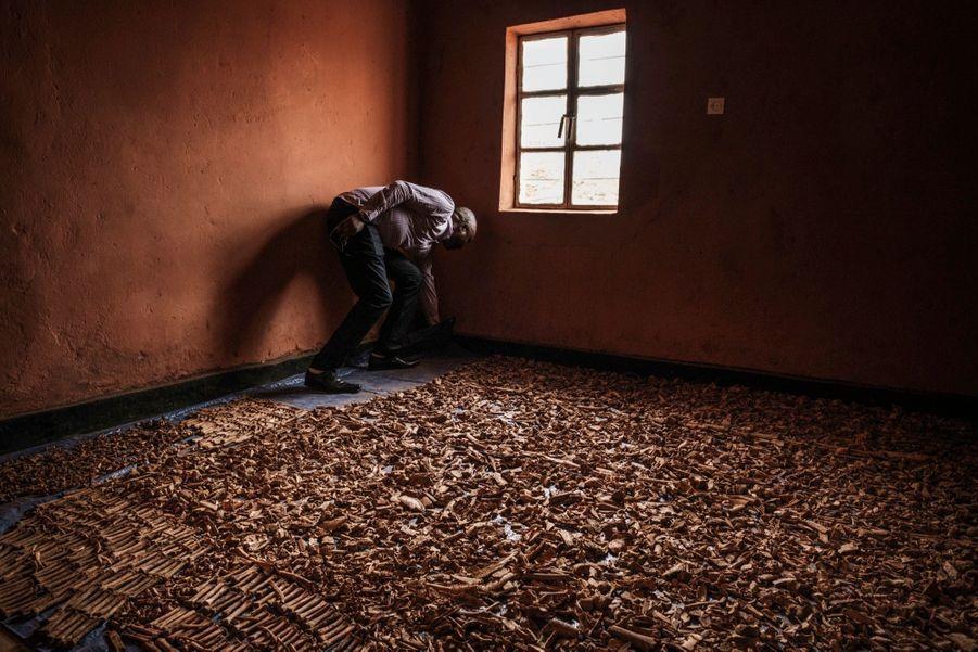 Après les avoir nettoyés, ce Tutsi trie et compte les ossements de victimes du génocide rwandais, enterrées pêle-mêle sous une maison de Kigali et retrouvés en 2019, vingt-cinq ans après la tragédie.