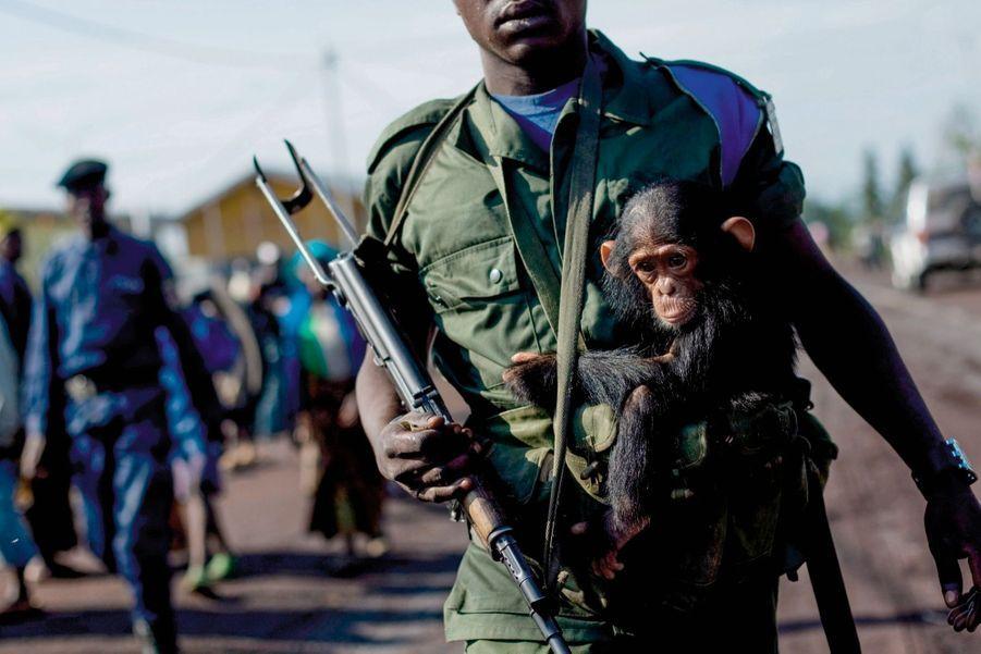 Ce bébé chimpanzé s'accroche au soldat qui a tué sa mère et s'apprête à le vendre. En République démocratique du Congo, le trafic d'animaux sauvages prospère grâce à la guerre civile. En 2008.