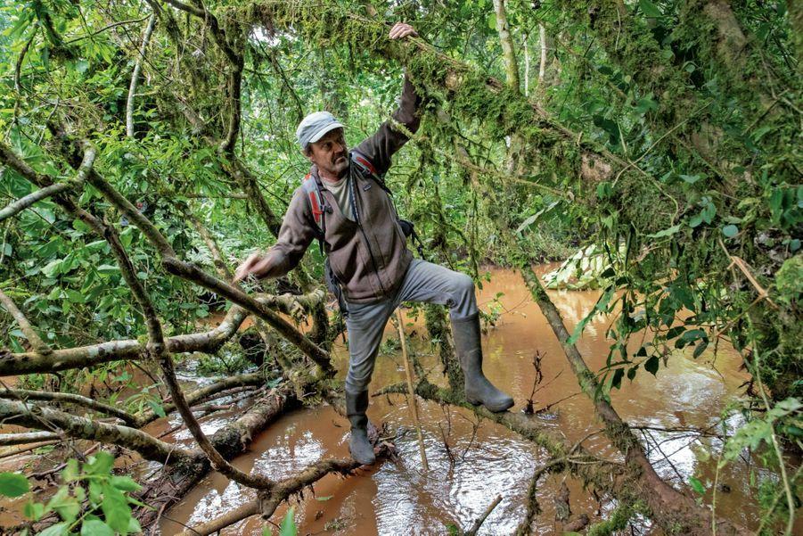 Après quinze mois au gouvernement, Nicolas Hulot n'a rien perdu de sa condition physique pour traverser la rivière Munobwa de branche en branche.