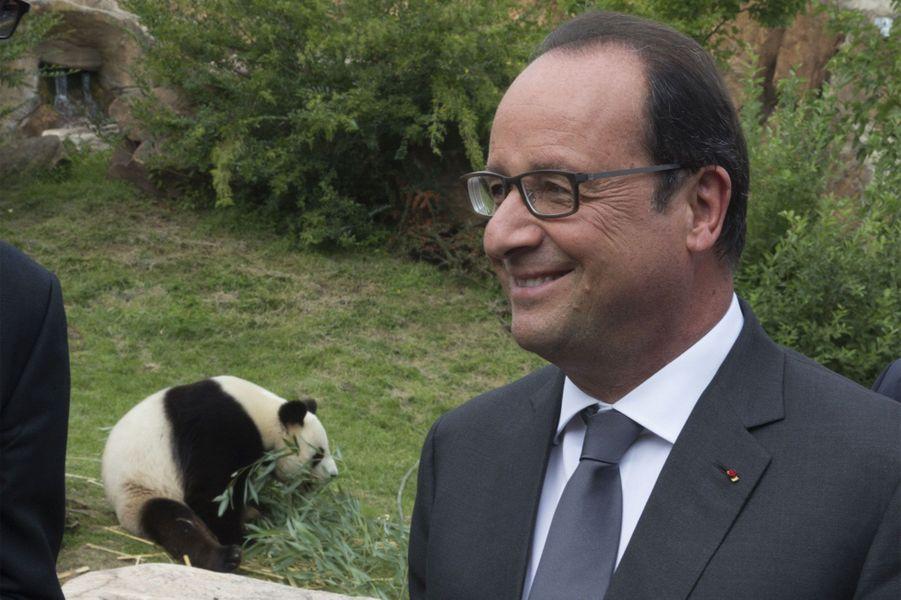 François Hollande parmi les pandas de Beauval