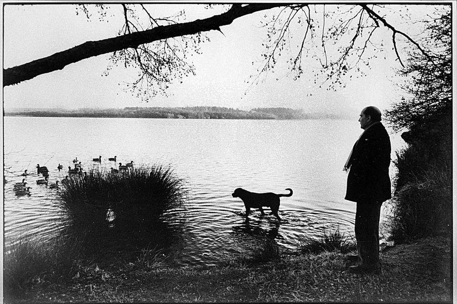 A Latche pour les fêtes de Noël de 1980, François Mitterrand flâne au bord de l'étang de Soustons avec Nil, son labrador mâle.