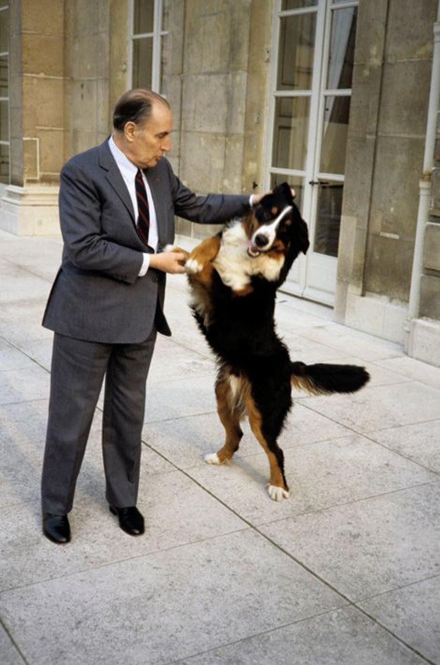 Le Président François Mitterrand avec Upsilon, le bouvier berlinois.