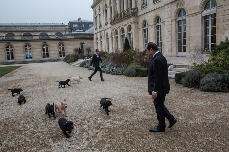 François Hollande en janvier 2017 à l'Elysée avec les chiots de Philae.