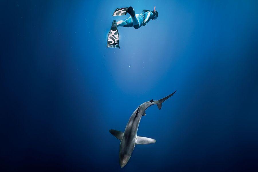 Marie, en apnée pour observer les requins au large de l'île de Faial, dans les Açores, début septembre.